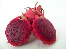 "2 x 5"" Dragon Fruit Cutting plant Red Type Pitaya Cactus Propagation"