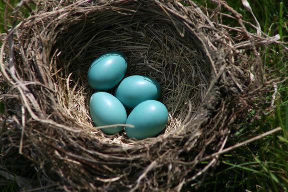Carmen s Nest
