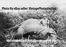 President Theodore Teddy Roosevelt Big Game Safari Africa Elephant Hunt Photo