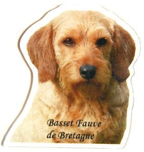 Basset Fauve de Bretagne Magnet Chien + Ardoise Magnétique Frigo + Marqueur N1