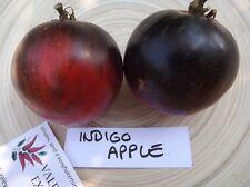 Indigo Apple Tomate 10+ Samen BESONDERS und RARITäT!