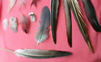 Natural FEATHERS x200  FREE FALLEN, large+small Colourful, grey, white, black UK