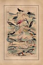 1873 STRAESSLE HC LITHO stork, flamingo, swan, heron, puffin, eider, pelican, ..