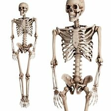 Halloween 90cm Skeleton Prop Poseable Life Size Horror Party Shop Decoration