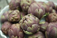 10 Graines BIO d'ARTICHAUT Violet-Vert / ARAD / Potager Légumes