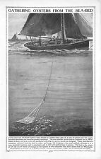 Oysters.Sea-bed.1920.Children's Encyclopedia.Shell-fish.Fishing.Boat.Dredging