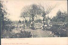 ZIMBABWE Bulawayo Indaba tree 1927 PC