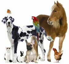Toltrazuril 5% 10 ML/CC w/ Syringe(s)  US SELLER Benefits Animal Rescue