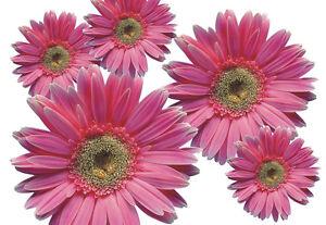 Blumen Aufkleber Flower Power Auto Aufkleber: Flower Set 03-Mini-36 Stück