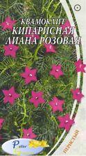 graines de Ipomoea quamoclit Lianel de cyprès rose - Star glory - Cypress vine