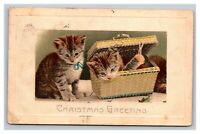 Vintage 1913 Christmas Postcard Two Cute Kittens Blue Bow in Basket