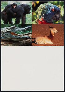 United Nations New York Maxi Card #22 - Chimpanzees, Parrot, Croccodile, Gazelle