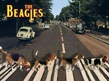 "Funny Beagle  refrigerator magnet 2 1/2x 3 1/2  """