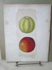 Vintage Print,APPLE,RIDGE PIPPIN,Vandeveer,Natural History NY,1851