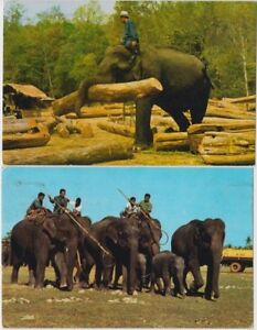 Stamps Thailand on 1980 pair of elephant postcards sent airmail to Australia