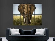 Elefante Africano POSTER Animali Selvatici Wild Safari Africa Giungla ARTE Muro Grande