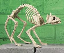 46cm esqueleto Poseable Gatito Gato Huesos Decoración Fiesta De Halloween Horror Utilería BN