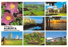Greetings From Alberta Wild Rose Country Continental card Alberta 625
