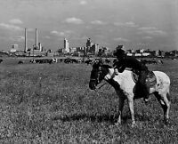 "1945 Dallas Texas Cowboy herds his cattle 14/""x11/"" Photo City View Vintage"