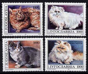 3809 YUGOSLAVIA 1992 DOMESTIC CATS **MNH