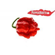 Semillas de Chile Superhot Colección 6 variedades: Carolina Reaper, Moruga, Bhut UK