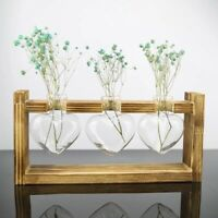 Indoor Plants Propagation Station Tabletop Three Heart Plant Vases Grow Cuttings