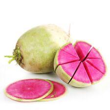"Watermelon Radish *Heirloom* (300 Seed's) ""FREE SHIPPING"" NON-GMO Radish"