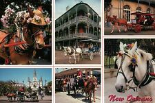 Horse Carriage Buggy Ride in New Orleans Louisiana, Horses, LA - Animal Postcard