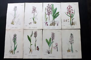 Sowerby 1869 Lot of 12 Hand Col Botanical Prints. Orchids. Book Plates
