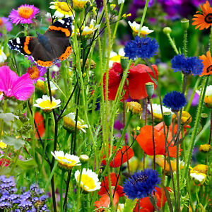 100% Wild Flower Seeds 50g NO GRASS Scented Bee Butterfly Meadow Cottage Garden