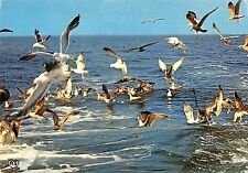 B98611 mouettes seagull france animals animaux