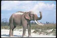 107095 éléphant indien énorme taureau poussière baignade A4 papier photo