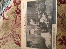 m11f ephemera ww1 picture 1916 britain northampton women sheep shearers