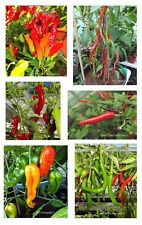 Chilli Pepper Seeds-ASIA Mix