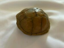 Real Turtle Shell in Original Condition