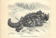 Stampa antica RETTILI DIAVOLO SPINOSO Moloch horridus 1891 Old antique print