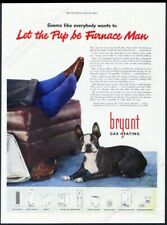 1947 Boston Terrier very cute color photo Bryant gas heating vintage print ad