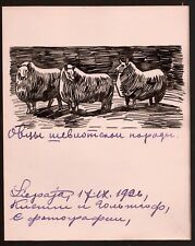 1926 Russian Art Sermoskin Ivan Ink on paper Original Drawing Sheep
