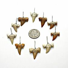"10 LG 1"" Grade A Wire Wrapped Sharks Teeth Necklace Pendants Wired Shark Tooth"