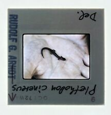 Red Backed Salamander 35mm Slide 1972 Amphibian Herpetology De Arndt Biology