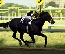 SEATTLE SLEW 8X10 PHOTO HORSE RACING PICTURE JOCKEY PREAKNESS