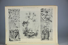 Antique ca1900 Print Chinese Art PL60-62 Paintings Museum China Qing
