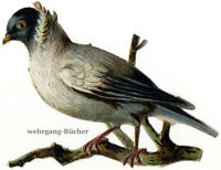 Vintage Victorian die cut paper scrap, Nun pigeon from c. 1880