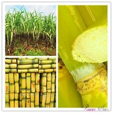 100pcs Vegetable and fruits Sugar cane seeds Are rich in sugar sugarcane seed Bo