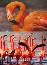 Flamingo - Bird - 3D and motion Postcard Lenticular Greeting Card  animated