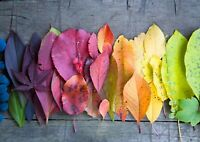A4| Coloured Autumn Leaves Poster Size A4 Colour Palette Art Poster Gift #16129