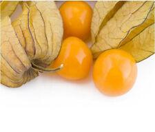 Fruit-cape GOOSEBERRY-GIGANTE-Physalis peruviana - 30 semi Finest