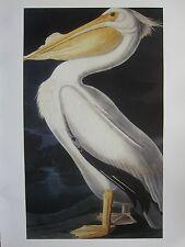 Vintage imprimé oiseaux ~ pélican blanc ~ john james audubon ~ Havell jnr