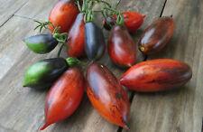 10 graines de tomate rare et unique SHADOW BOXING Dwarf Tomato Project méth.bio