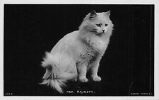 B94998 real photo cat chat her majesty animal